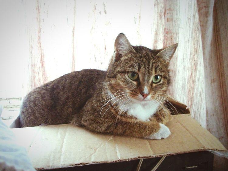 Лиза киска наслаждается покоем и умиротворением дома на столе, проказница!!)))) Cat Portrait Cat Katzen Cat Photography Eyem Cat Lover Cats Cats 🐱 Eyemcat Sibiriancat Relaxing