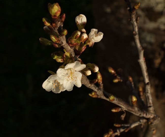 Close-up of wilted flower on branch