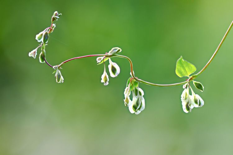 Close-Up Of Plants On Twig