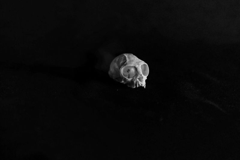 .03 Delicate Kranium Skull Black And White Black And White Photography Textured Surface Natural History Still Life Teeth Isolated Marmoset Mammal Animal Close-up
