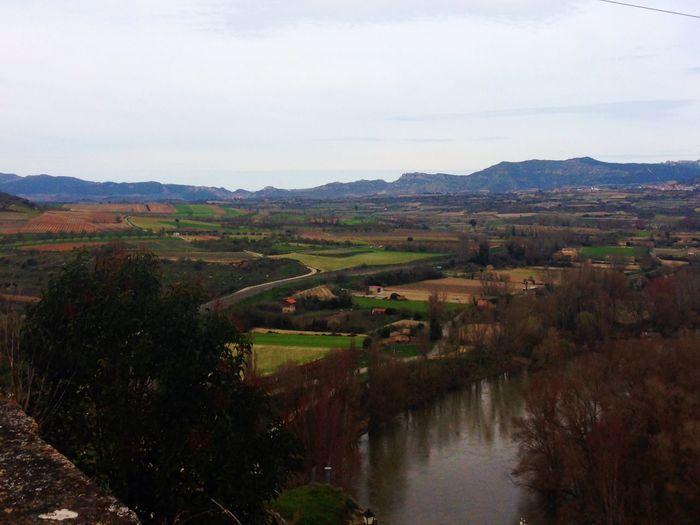 Vineyard Viñedos Larioja Winelovers