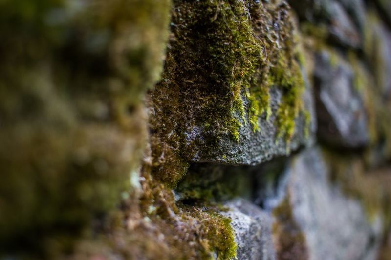 Snuff mills, October 2017 Adventure Wall Ruins Architecture Magical Places Magical Wabi-sabi Water Moss Beach Close-up Lichen Algae Fungus Growing