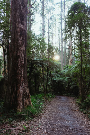 Sherbrooke Forest Falls Trail, Dandenong Ranges, Melbourne, Australia Australia Beauty In Nature Branch Dandenong Ranges Day Forest Growth Melbourne Nature No People Outdoors Scenics Sherbrooke Sherbrooke Falls Walk Tranquil Scene Tranquility Tree Tree Trunk Victoria WoodLand The Great Outdoors - 2017 EyeEm Awards