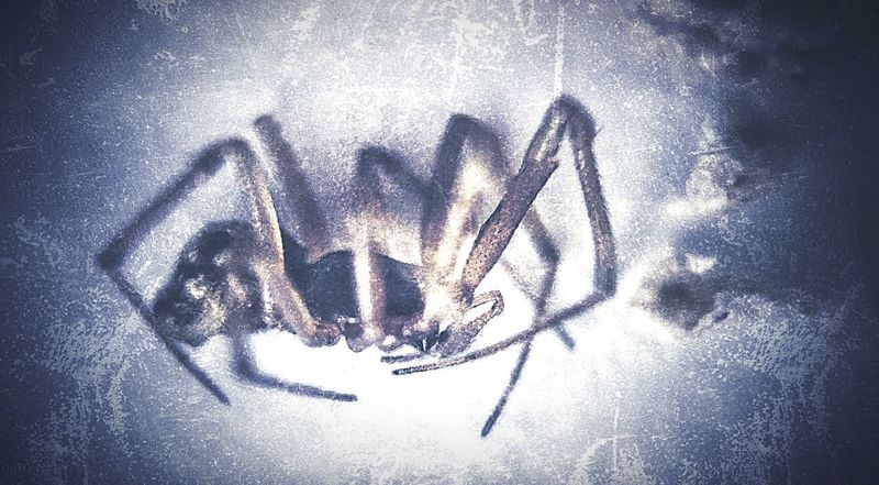 Spider 2 Spider Close-up No People Indoors  Nature Shadow High Angle View Water