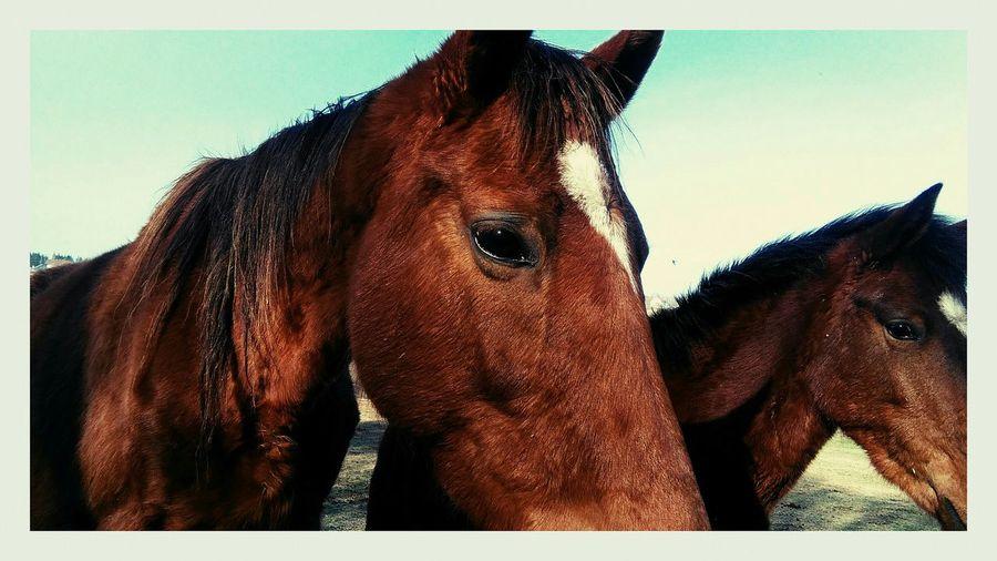Horses 🐴🐎 Horses Horsepower Animals Horseslovers