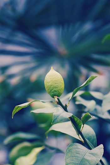 Plant Growth Close-up Beauty In Nature Focus On Foreground Freshness Green Color The Minimalist - 2019 EyeEm Awards