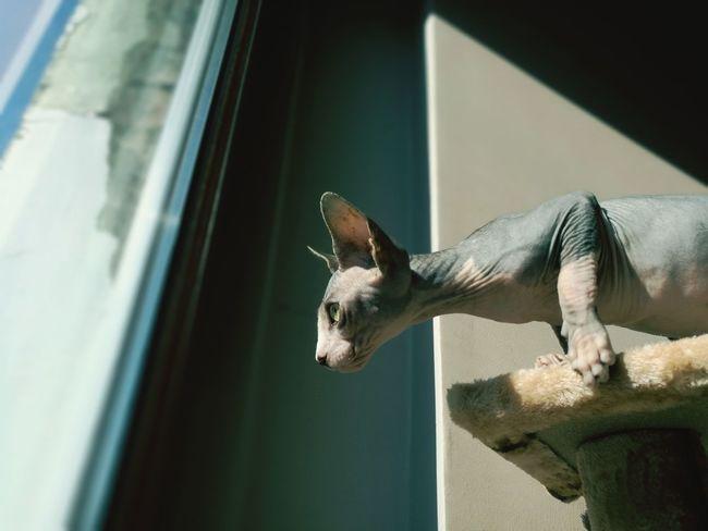 Pets Cat Animal Themes Focus