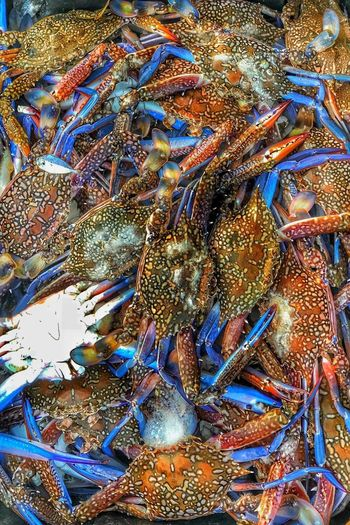 les crabes .. fishe Crabes Poisson Mer Fruit Fruit De Mer EyeEm Selects France 🇫🇷 Top View Multi Colored Backgrounds Full Frame Pattern Abstract Close-up Fish Market Fishing Net Dried Fish  Catch Of Fish Fishing Hook Fisherman Fishing Tackle Commercial Fishing Net Fishes Dead Animal Textured  Fishing Industry Crushed Ice Fishing Abstract Backgrounds Fishing Equipment Buoy Detail