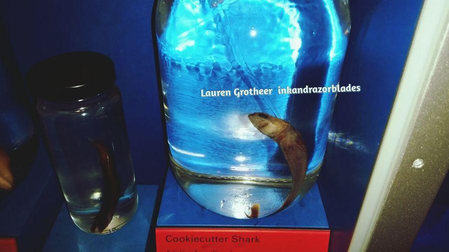 Jaws Shark Aqua SharkInSight Museum Natural Fins Water H2o