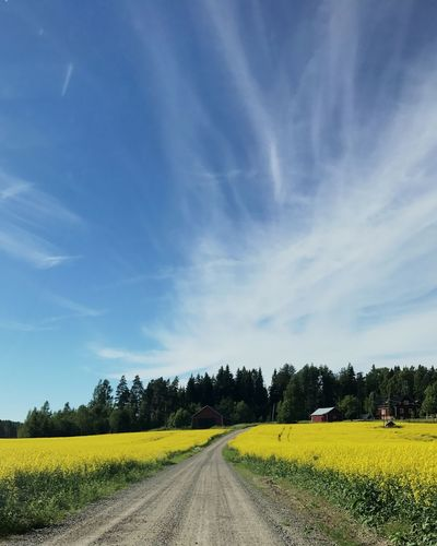summer in finland Yellow Finland Summer The Way Forward Transportation Nature Tranquil Scene Landscape Field Sky Outdoors Blue Beauty In Nature No People Road Day Tree First Eyeem Photo