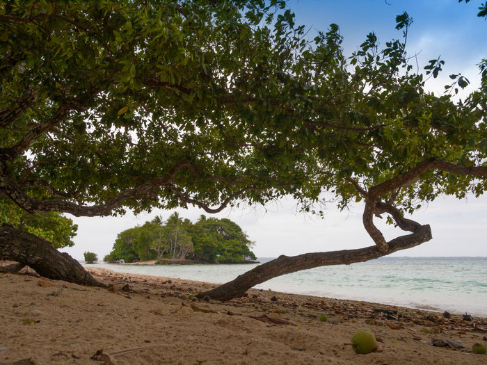 Port Vila Vanuatu Basket Beach Blue Sky Blue Water Coastline Fruit Landscape Melanesia Nature Outdoors Pacific Ocean Palm Tree Sand Sand Dune Scenics Sea Tourism Travel Destinations Tree Tropical Climate Vacations Vivid International Water Wave Woven Baskets