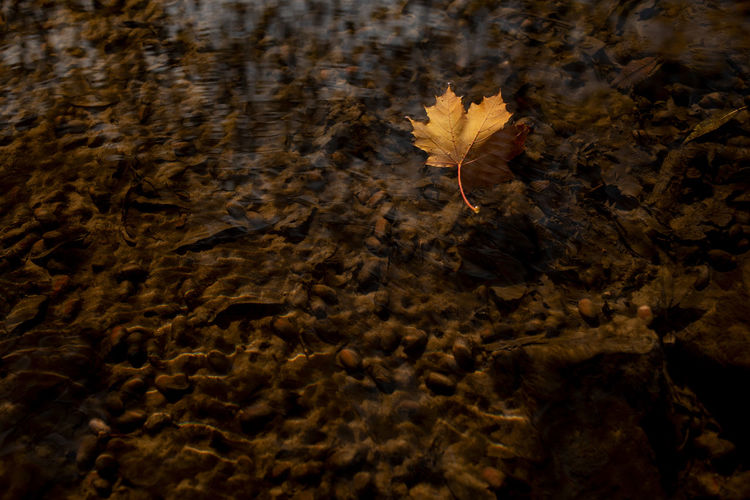 Nature No People Leaf Water Plant Part Plant Day High Angle View Full Frame Outdoors Close-up Autumn Brown Reflection Motion Tree Land Floating Beauty In Nature Change Floating On Water