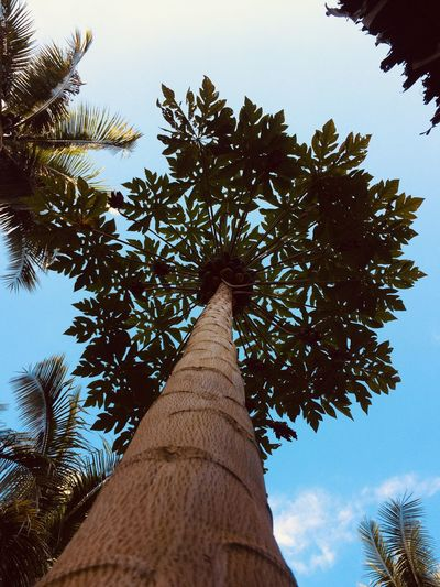 """""""Soar High"""" Plant Low Angle View Nature No People Tall - High First Eyeem Photo"""