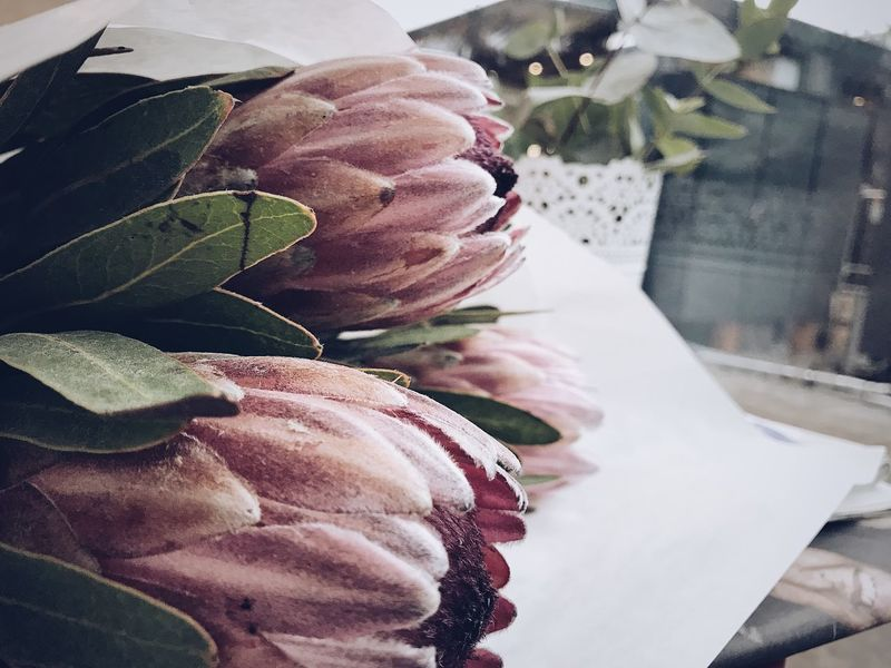 No People Close-up Freshness Leaf Flower Nature Flower Head Close Up Still Life Pink Color Botanical Closeup Protea Blossom Protea Flower Bouqet Of Flowers Bouquet Of Flowers Protea Flower Collection Freshness Nature Proteas Focus On Foreground Petal Plant Table