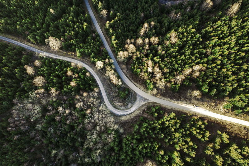 High angle view of road amidst trees