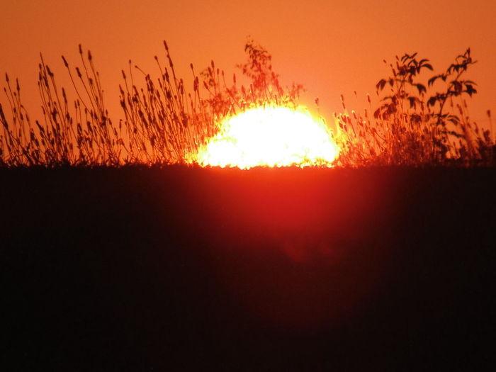 early morning sunrise, seen through the weeds. Eyeem Sunset-sunrise Sunrises Sun