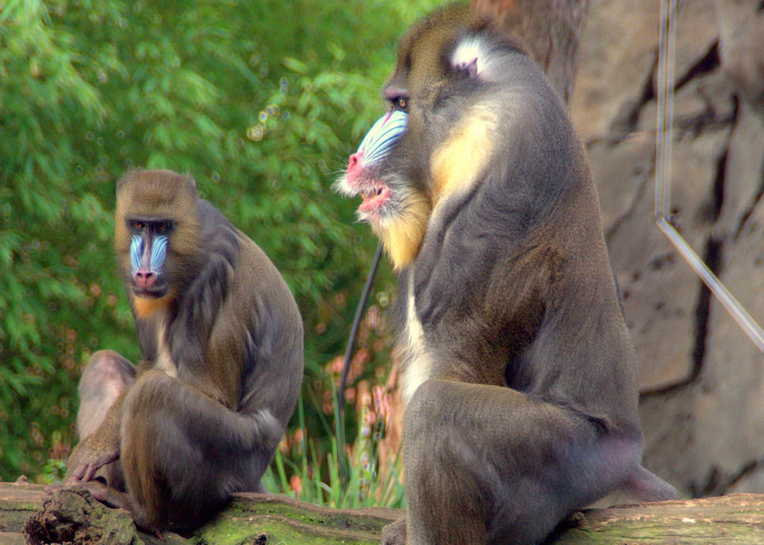 animal themes, monkey, animals in the wild, wildlife, togetherness, two animals, primate, young animal, focus on foreground, animal family, sitting, mammal, three animals, nature, outdoors, day, close-up, one animal, bird