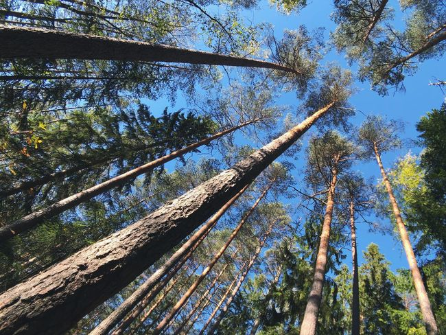 Tree Plant Low Angle View Growth Forest No People Beauty In Nature
