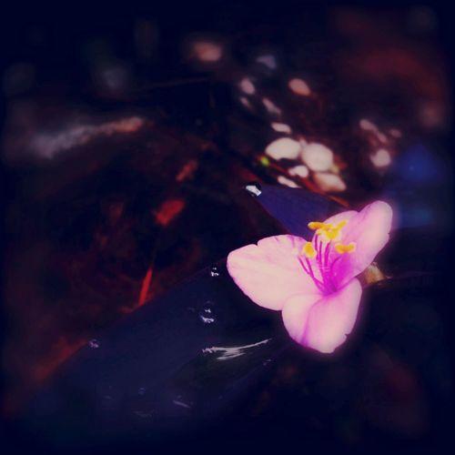 Saturday Flower With Rain