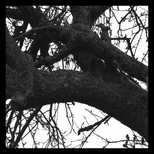 La Main... Tree Human Hand Low Angle View Human Body Part Day Outdoors Close-up Sky Only Men People First Eyeem Photo La Main Trees Nature Nature Photography Arbres Noiretblanc Noir Et Blanc Photographie Blackandwhite Blackandwhite Photography