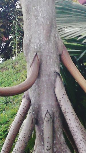 Tree Walking Tree Costa Rica New Legs Growing San Vito, Costa Rica Taking Photos Life Look Mysterious Nature Photography Nature