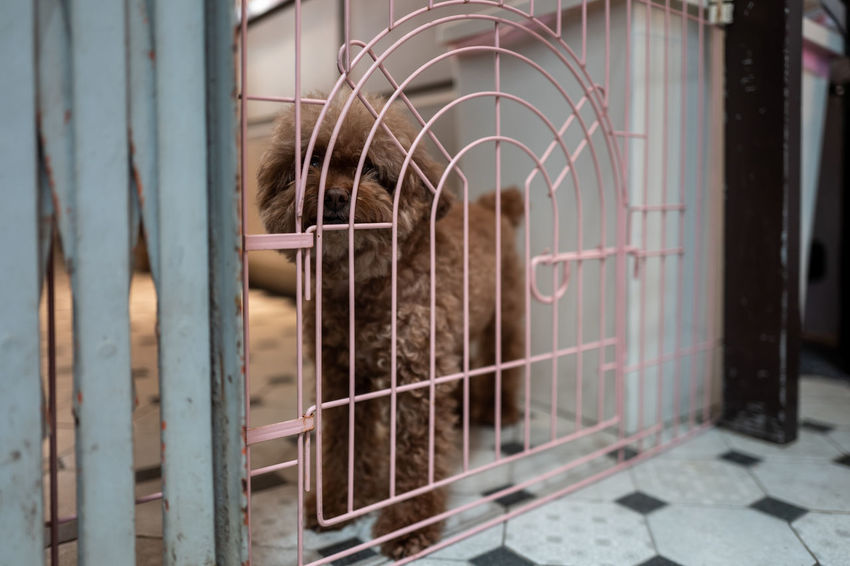 Tainan, Taiwan Animals In Captivity Architecture Building Built Structure Cage Close-up Day Domestic Animals Door Entrance Metal No People One Animal Outdoors Protection Safety Security Selective Focus Window
