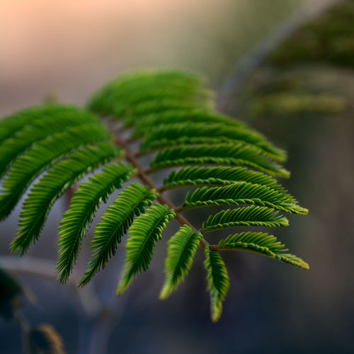 Leaf Green Color Growth Plant Part Plant Close-up Nature Beauty In Nature Outdoors Fragility Selective Focus Vulnerability  Tree Freshness