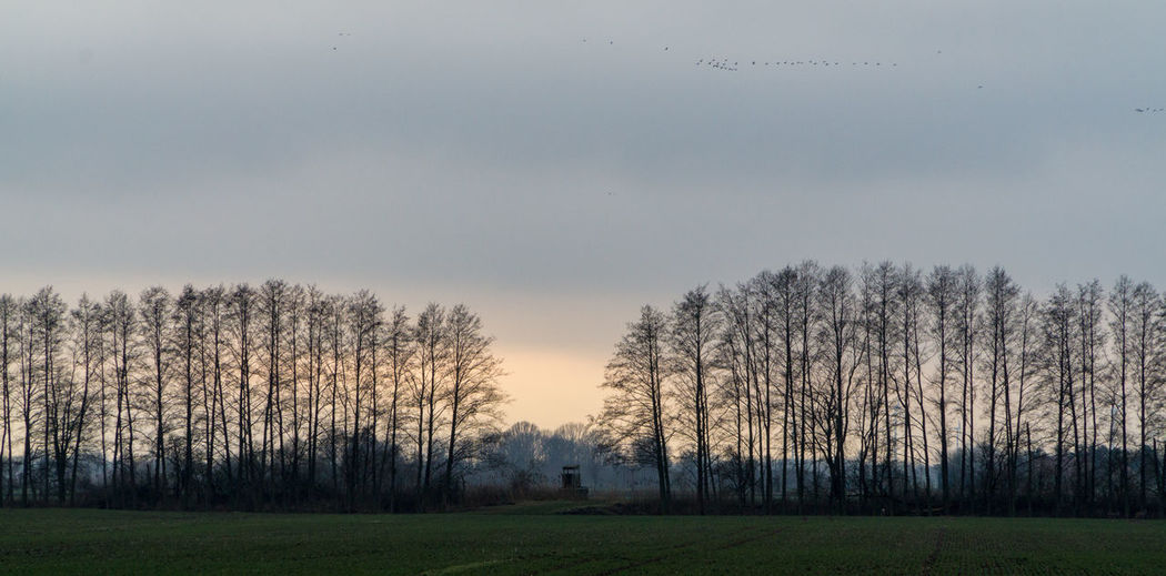 Landsscape photography in the area of Oderbruch in Germany. Empty Space Bare Tree Beauty In Nature Day Field Grass Growth Landscape Nature No People Outdoors Scenics Sky Tranquil Scene Tranquility Tree Treeline Treelines