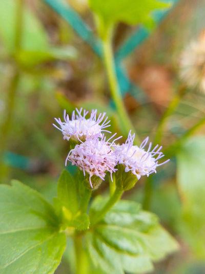 Wildflower Flower Microlensphotography❤ Grass Flowers Grass Green Purple Fragile