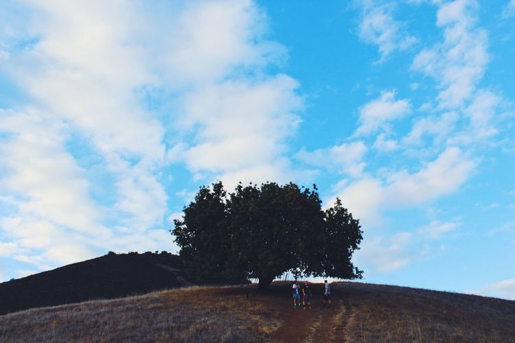 Tree Tree On A Hill Blue Sky Hiking Hike Trail Exploring Adventure Friend Mountain High Life Views EyeEm Best Shots - Landscape Landscape_Collection EyeEm Best Shots - Nature EyeEm Best Shots - Trees EyeEm Best Shots