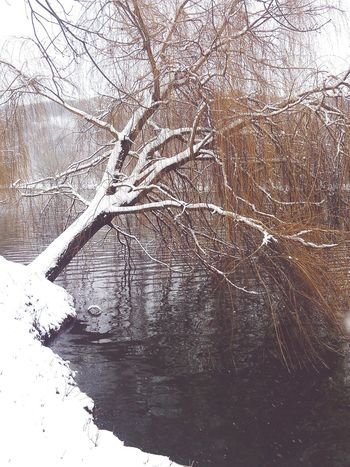 Beautiful Trees Winter Snow Lake Lake View Hungary Cold Days Cold January