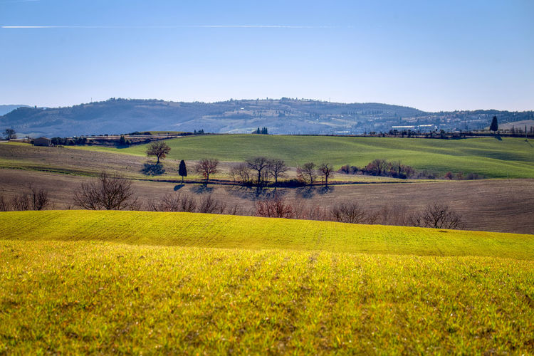 Val D Orcia Trees Line Fieldscape Mountains Background Landscape Environment Scenics - Nature Beauty In Nature Land Tranquil Scene Rural Scene Nature Sky Non-urban Scene Tree Idyllic My Best Photo