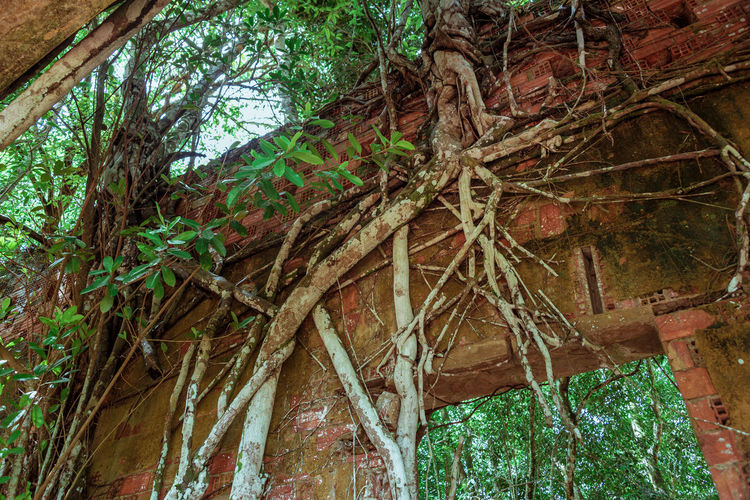 Ruins of Paricatuba - House built in Paricatuba, state of Amazonas, in the year of 1889, first used as a shelter for Italian immigrants, and later was a high school of arts and crafts, a public jail and a leprosarium. Abandoned Buildings Amazon Amazonas Branch Close-up Forest Green Color Leaf Low Angle View Nature No People Paricatuba Ruins