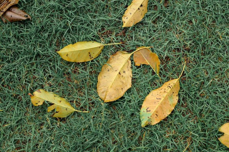 High angle view of leaves on ground