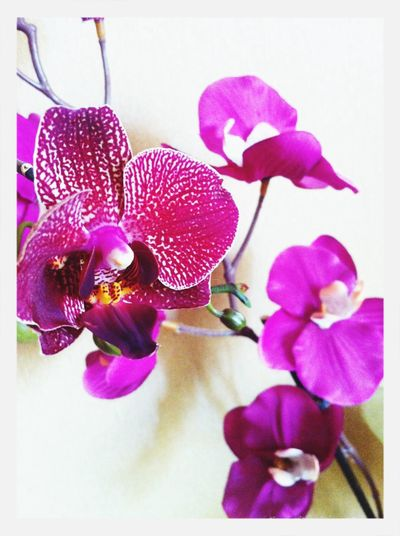 First Eyeem Photo Storczyk Fioletowy Kwiaty