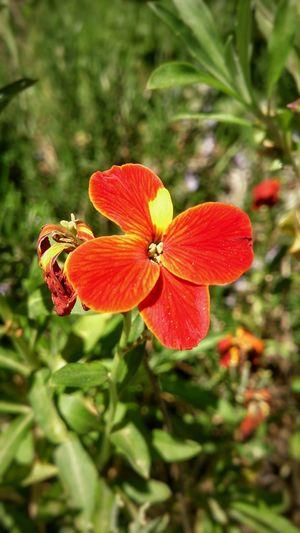 Sony Xperia Flower Head Flower Petal Plant