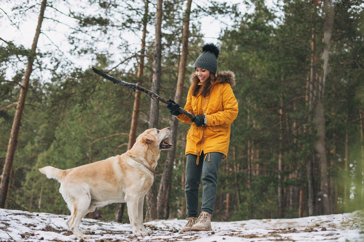 Young woman in yellow jacket trains big kind white dog labrador walking in winter forest