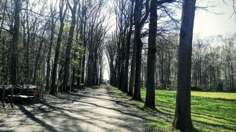 Day Nature Non-urban Scene Pathway Road Sunny Day The Way Forward Tranquil Scene Tranquility Tree