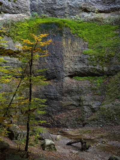 Nature Rock Plant No People Solid Rock - Object Nature Day Tree Land Outdoors Beauty In Nature Geology Rock Formation Textured  Full Frame Close-up Growth Moss Environment Non-urban Scene Formation Cholereschlucht Swizerland