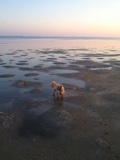 High Angle View Of Dog At Beach During Sunset