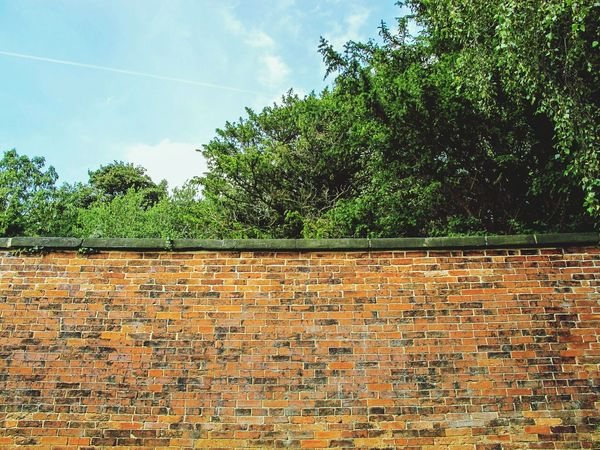 Looking Up Tree Green Leaves Sunny Day Geometric Shapes Wall Wall Art Pattern Pattern Pieces Brick Wall Bricks Red Brick Red Brick Wall Light And Shadow Textures And Surfaces Pivitol Ideas Colour Of Life Colour Palette Summer Walls English Countryside Landscape Nature