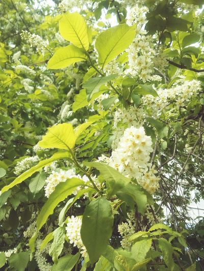 Green Color Flowers Plant Beauty In Nature Springtime Day Tree