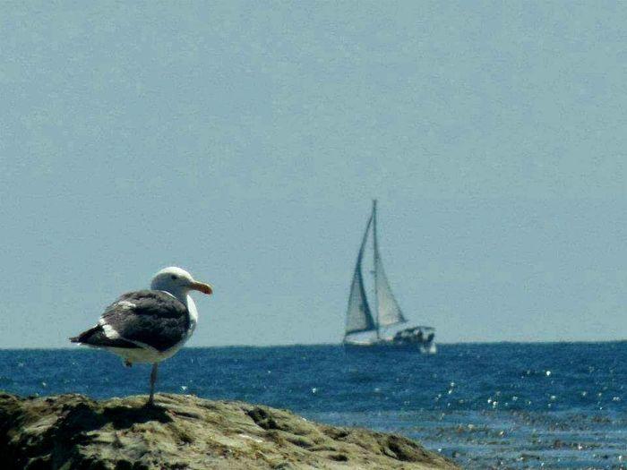 Sea Bird One Animal Animal Themes Beach Animals In The Wild Animal Wildlife Water Nautical Vessel Nature Outdoors Day Perching No People Sky