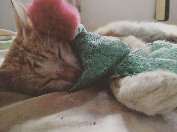 So cute my cat Miki Mypet Mycat