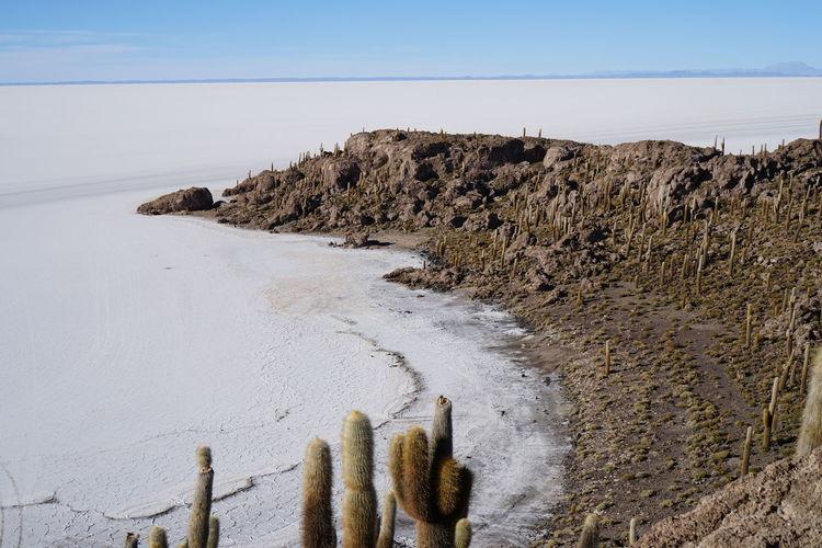 Cactus By Salt Flat Against Clear Sky
