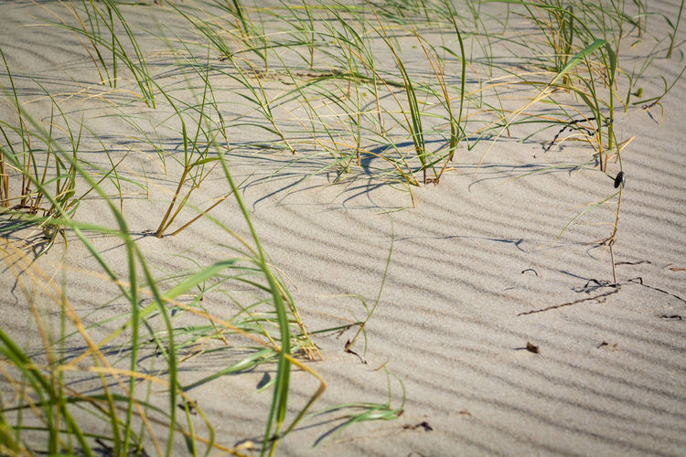 Beach Beauty In Nature Day Grass Nature No People Outdoors Sand Summer Wind