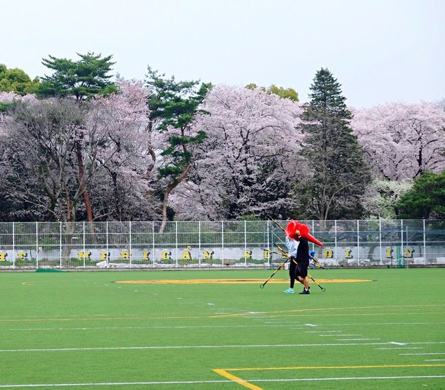 Cleanup Sport Leisure Activity Sports Clothing Grass Trees And Sky Cherry Blossoms Cherry Blossom Football Football Field Baseball - Sport Baseball Field Baseball Game Break The Mold