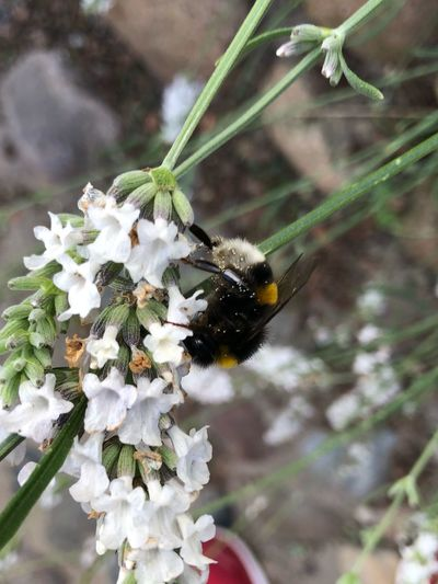 IPhone X IPhone X Photography Bumblebee Animals In The Wild Invertebrate Animal Wildlife Animal Themes Insect Plant One Animal Animal Focus On Foreground Flowering Plant Fragility Close-up Freshness Growth Nature Vulnerability  Flower Beauty In Nature Bee No People