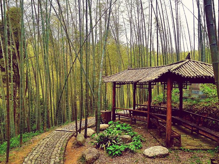 Nature Nature_collection Nature Photography Bamboo Bamboo Forest Shelter In the bamboo forest.🎋🎋