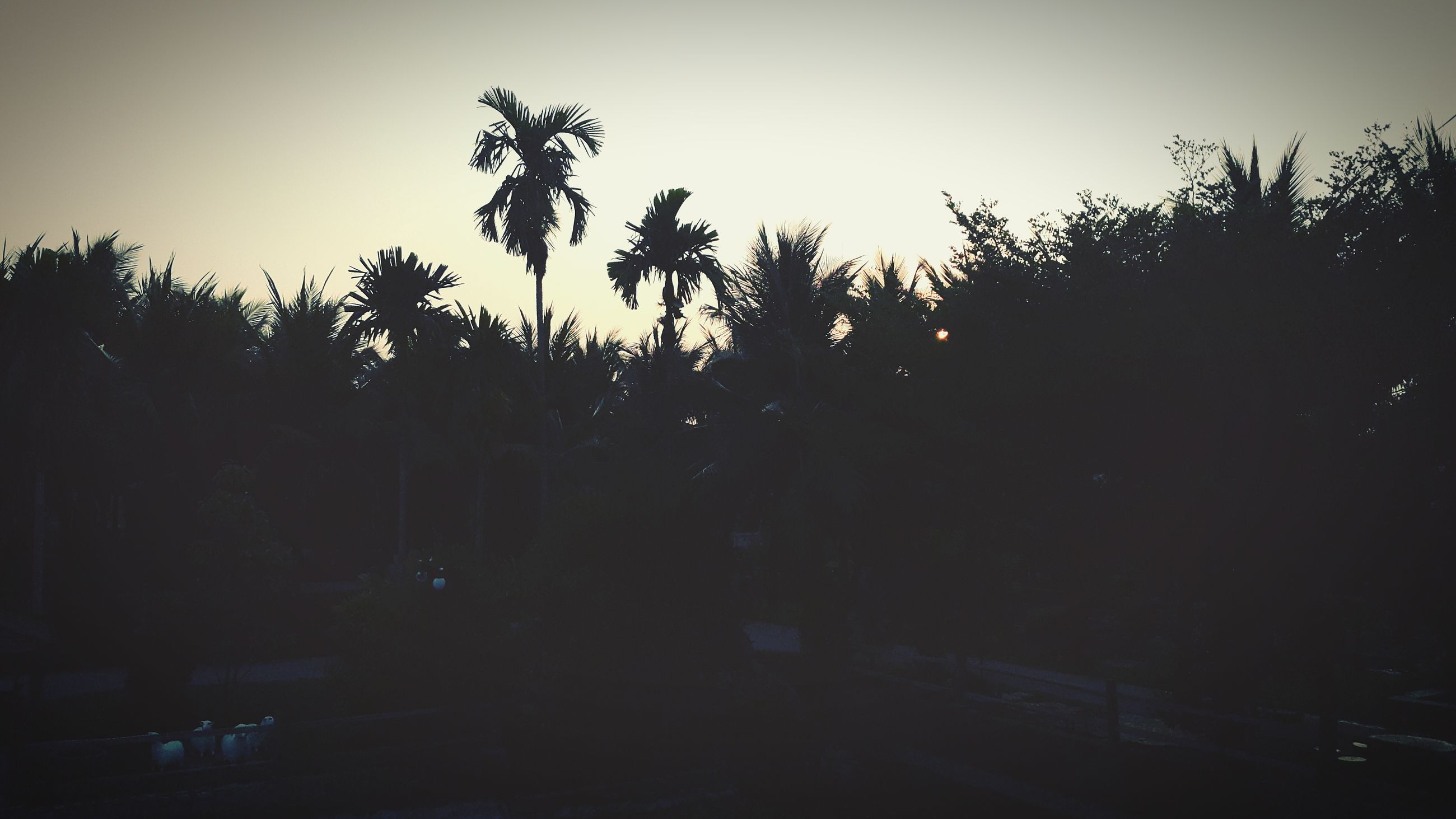 silhouette, tree, clear sky, growth, sky, copy space, nature, dark, dusk, sunset, tranquility, night, beauty in nature, tranquil scene, outdoors, palm tree, no people, scenics, outline, transportation
